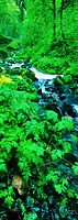 914500004 panorama of ferns and lush green plants surrounding wahkeena falls and the resultant stream that flows over moss covered boulders in the columbia gorge national scenic area in oregon