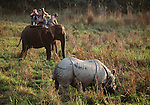Tourists on Elephant watching Indian One-horned Rhinoceros (Rhinoceros unicornis). Chitwan National Park, Nepal