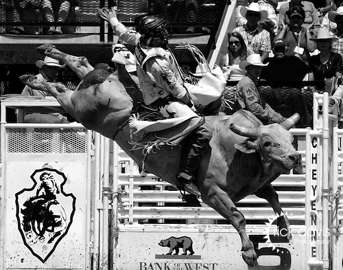A Professional Rodeo Cowboy Association contestant competes in the extreme sport of bull riding at the annual Cheyenne Frontier Days Rodeo held at Frontier Park in Cheyenne, Wyoming.