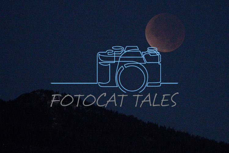 The lunar eclipse sets over the ridge of the Sierra, seen from Gardnerville, Nev., on Saturday, Dec. 10, 2011. .Photo by Cathleen Allison