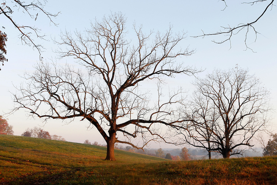 Leafless trees are illuminated by morning sunlight and fog on a farm in Buckingham County, VA. Photo/Andrew Shurtleff