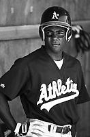 Miguel Tejada of the Modesto Athletics at Mavericks Stadium in Adelanto,California during the 1996 season. (Larry Goren/Four Seam Images)