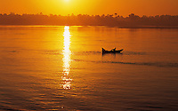 Small rowingboat crosses the river Nile at sunset; near Kom Ombo, Egyp