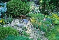 Hardy cactus collection in Connecticut rock garden