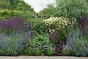 Mixed herbaceous border containing Anthemis tinctoria 'E.C. Buxton', Salvia nemorosa 'Ostfriesland', Nepeta,  Geraniums, Clematis and Buddleia, Town Place, late June.