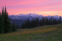 Mount Olympus rising over the Bailey Range in Olympic National Park, Washington from subalpine meadow near Obstruction Point.  Summer sunset.