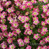 Gisela, FLOWERS, BLUMEN, FLORES, photos+++++,DTGK2361,#F#, EVERYDAY