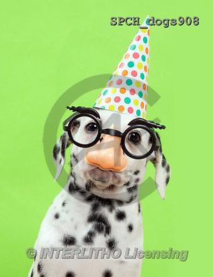 Xavier, ANIMALS, REALISTISCHE TIERE, ANIMALES REALISTICOS, dogs, photos+++++,SPCHDOGS908,#A#