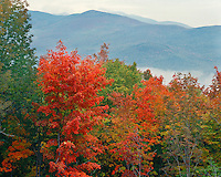 Forest in fall color in the fog; White Mountains National Forest, NH