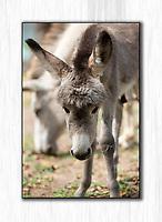 Donkey baby<br /> St. John<br /> US Virgin Islands