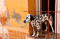 Portrait of spotted dog against colorful wall in Trinidad Cuba