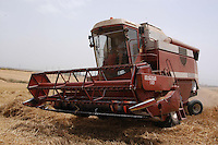 Raccolta del grano. Grain harvest. ...