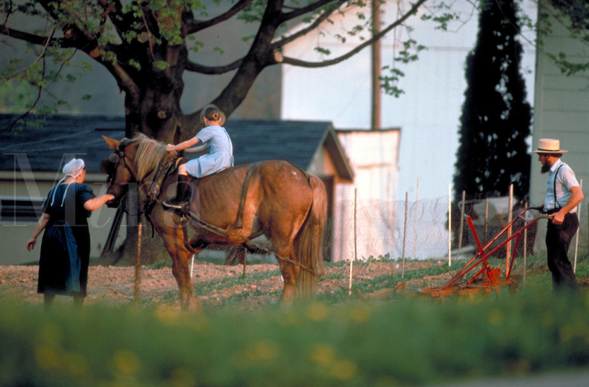 Amish family cultivate the family garden with a horse drawn plow. A young girl rides the horse. Amish family. Lancaster Pennsylvania United States.