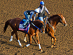 October 27, 2014:  Mico Margarita, trained by Steve Asmussen, exercises in preparation for the Breeders' Cup Xpressbet Sprint at Santa Anita Race Course in Arcadia, California on October 27, 2014. John Voorhees/ESW/CSM