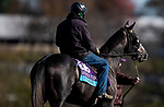 November 2, 2020: Outadore, trained by trainer Wesley A. Ward, exercises in preparation for the Breeders' Cup Juvenile Turf at Keeneland Racetrack in Lexington, Kentucky on November 2, 2020. Alex Evers/Eclipse Sportswire/Breeders Cup