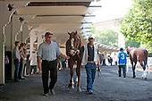 Shackleford walks the Belmont Park paddock.