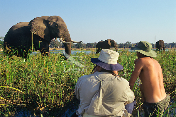 Photographing bull elephant along Zambezi River from canoe.   Photographer Tom Kitchin and Guide Ivan Carter.  Manna Pools National Park, Zimbabwe.