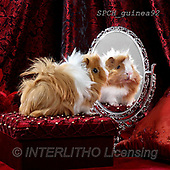 Xavier, ANIMALS, REALISTISCHE TIERE, ANIMALES REALISTICOS, photos+++++,SPCHGUINEA92,#A#, EVERYDAY ,funny
