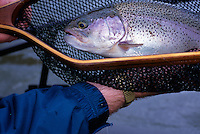 Large rainbow trout, Summer Lake, Oregon
