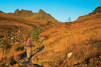 The Cobbler at dawn, the Arrochar Alps, Loch Lomond and the Trossachs National Park, Argyll & Bute