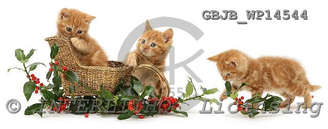 Kim, CHRISTMAS ANIMALS, photos, GBJBWP14544,#XA# stickers