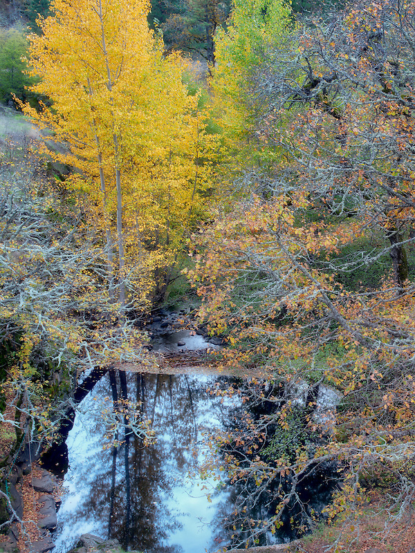 Catherine Creek with pool and fall color. Columbia River Gorge National Scenic Area, Washington