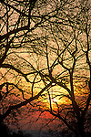 A tangle of tree branches are silhouetted by a sunset in Boulder, Colorado.