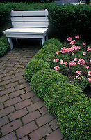 White wooden garden bench with compact box, yew, pink geraniums, brick walkway