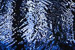 Water reflections, Washington Park Arboretum, Seattle, Washington