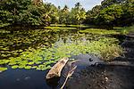 Pond With Lily Pads Ajacent To Punalu'u Black Sand Beach