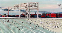Pigeons and Port of Oakland and Bay Bridge, 1987.   &#xA;<br />