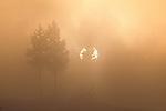 Sunrise through geyser fog in winter, Yellowstone National Park, Wyoming, USA