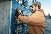Iditarod musher Elliot Anderson takes one of his dogs from its dog box at the 2016 Iditarod Pre-race vet check in Wasilla, Alaska. March 02, 2016 <br /> <br /> © Jeff Schultz/SchultzPhoto.com ALL RIGHTS RESERVED<br /> DO NOT REPRODUCE WITHOUT PERMISSION