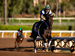OCT 26: Breeders' Cup Distaff entrant Elate, trained by William I. Mott, gallops at Santa Anita Park in Arcadia, California on Oct 26, 2019. Evers/Eclipse Sportswire/Breeders' Cup