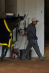 25 April 2010: Conveyance walking the shedrow in Barn 33 Monday morning at Churchill Downs in Louisville, Kentucky.