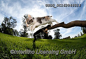 REALISTIC ANIMALS, REALISTISCHE TIERE, ANIMALES REALISTICOS, cats, paintings+++++,USLGSC162044514,#A#, EVERYDAY ,photos,fotos,pounce,cat,cats,kitten,kittens,Seth