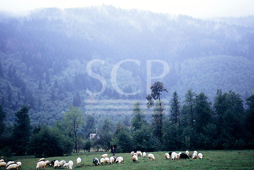 Sarajevo, Bosnia. View of the Igman Mountains with sheep and a shepherd with an umbrella.