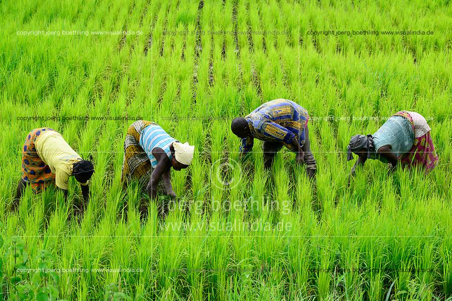 BURKINA FASO, Province Poni, Gaoua, rice farming, farmer weeding in paddy field / Reisanbau, Bauern jaeten Unkraut im Reisfeld