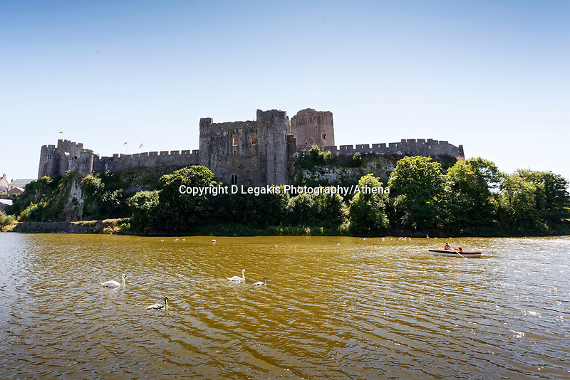 """Pictured: The killer swan, named by locals """"Mr Nasty"""" (L) with his family in the pond by Pembroke Castle, west Wales, UK. Sunday 08 July 2018<br /> Re: A vicious killer swan is prowling around Pembroke, determined to see off any threat to his territory by ruthlessly drowning his victims.<br /> So far, he has killed 10 other swans, though many more have been saved from his attacks.<br /> Dubbed by locals """"Mr Nasty""""  lives on the Castle Pond by Pembroke Castle. <br /> Bird sanctuary worker Maria Evans says she has watched him at work, drowning other swans, breaking their feet or pushing them over a sluice.<br /> In 2010, another killer swan dubbed """"Hannibal"""" had his wings clipped after attacking other swans in the same pond."""