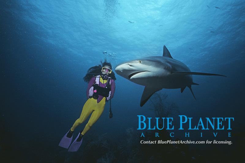 Diving with Caribbean Reef Sharks (Carcharhinus perezii), Bahamas - Caribbean Sea.