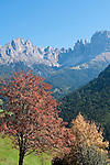 Italy, South Tyrol, Alto Adige, Dolomites, near San Cipriano: autumn scenery with Catinaccio and Torri del Vajolet mountains | Italien, Suedtirol, Dolomiten, bei St. Zyprian: Herbstlandschaft mit Rosengarten und Vajolettuerme