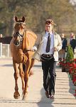29 September 2010. #505 Christopher Burton and Holstein Park Leilani from team Australia.