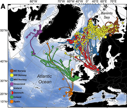 Map from the study showing that tagged Irish salmon primarily migrated westward towards east Greenland