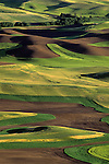 Rolling hills of newly planted wheat from Steptoe Butte State Park, Eastern Washington State USA.