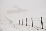 A country road twists in the fog by a barn covered with snow in the Sierra Nevada Foothills of Calif.