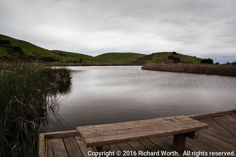 The view from an observation deck over what is, once again, thanks to the rains, wetland at Coyote Hills Regional Park in California.