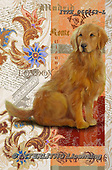 Isabella, REALISTIC ANIMALS, REALISTISCHE TIERE, ANIMALES REALISTICOS, paintings+++++,ITKE066162-L,#a#, EVERYDAY ,dogs ,collage