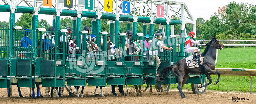 Holy Guacamole breaks through the gate at Delaware Park on 10/7/21