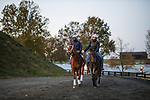 November 2, 2020: Ce Ce, trained by trainer Michael W. McCarthy, exercises in preparation for the Breeders' Cup Distaff at  at Keeneland Racetrack in Lexington, Kentucky on November 2, 2020. Alex Evers/Eclipse Sportswire/Breeders Cup
