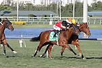 #5 Star Channel with jockey Jose A Lezcano on board wins the Florida Sunshine Millions Turf  at  Gulfstream Park, Hallandale Beach, Florida 01-18-2014